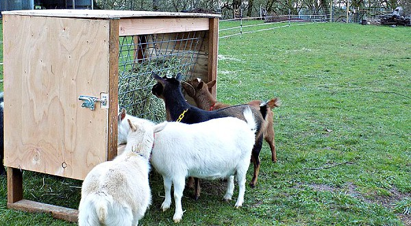 Goat Feeder Construction